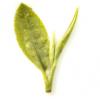 2021新茶上市卢正浩龙井茶正宗雨前浓香卢派绿茶春茶散装茶叶250g