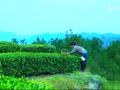 四川农村姑娘上山采摘茶叶,贫穷限制了我的想象,茶叶糕点与茶绝配 (4播放)